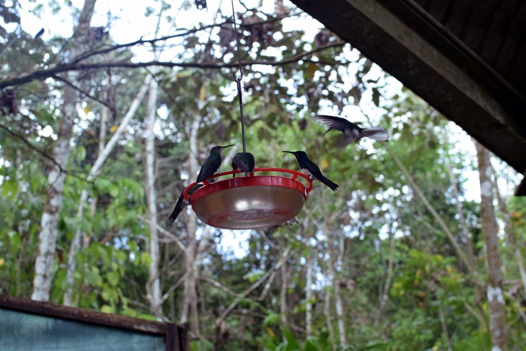 Travelogue Selection 10 - 04-03-15 - Gamboda Hummingbirds