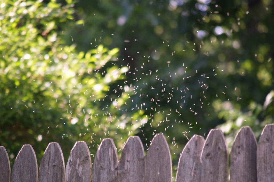 how to avoid gnats outside