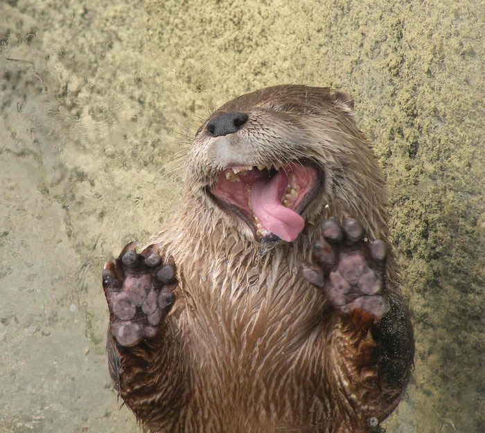 funny-animals-licking-glass-36