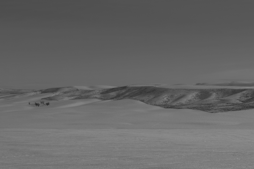 palouse-dsc_0223-bw-true-small