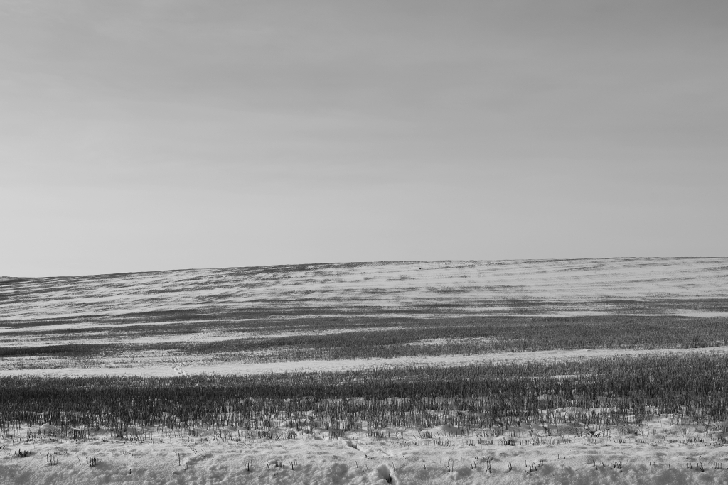 palouse-dsc_0227-bw-true-small