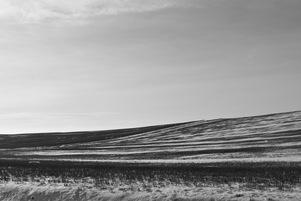 palouse-dsc_0228-bw-true-small