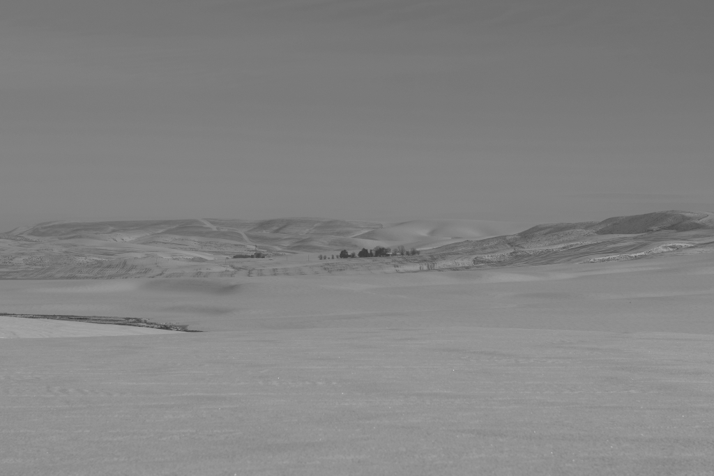 palouse-dsc_0233-bw-true-small