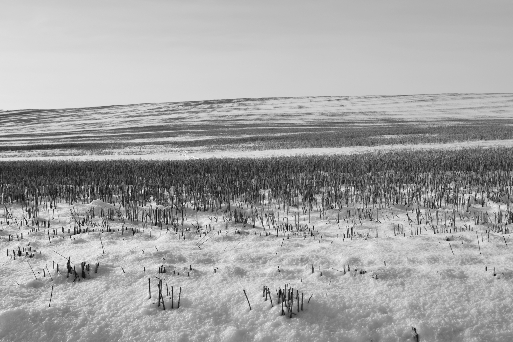 palouse-dsc_0236-bw-true-small